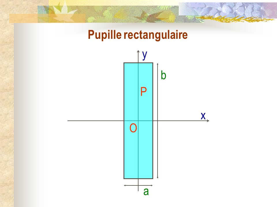 Pupille rectangulaire