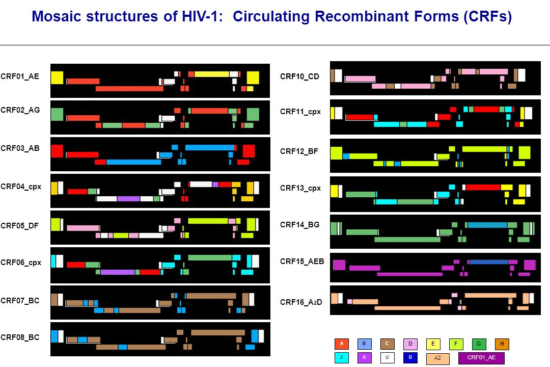 Mosaic structures of HIV-1: Circulating Recombinant Forms (CRFs)
