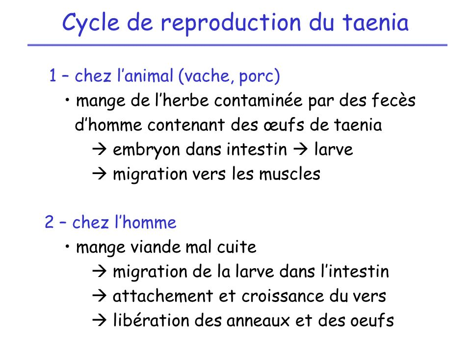 Cycle de reproduction du taenia