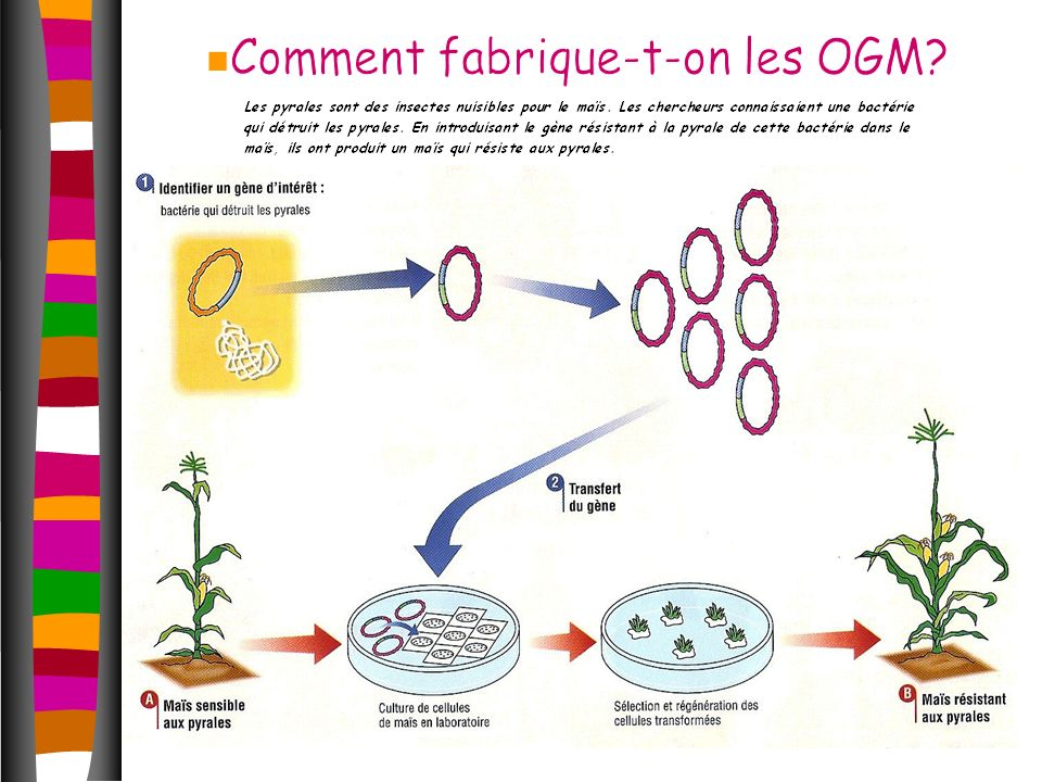 Comment fabrique-t-on les OGM