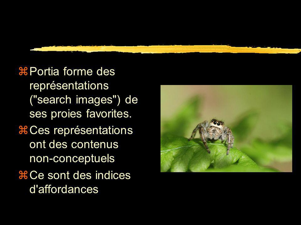 Portia forme des représentations ( search images ) de ses proies favorites.