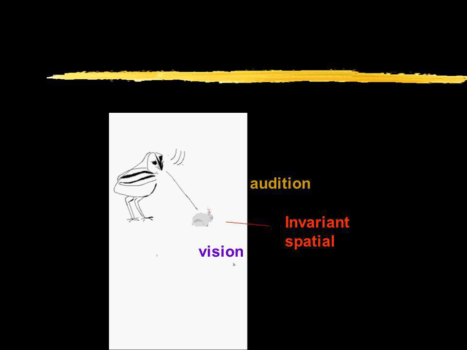 audition Invariant spatial vision