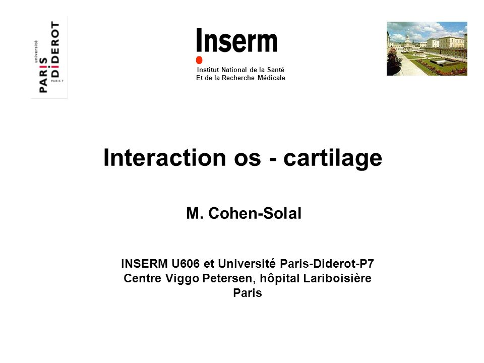 Interaction os - cartilage