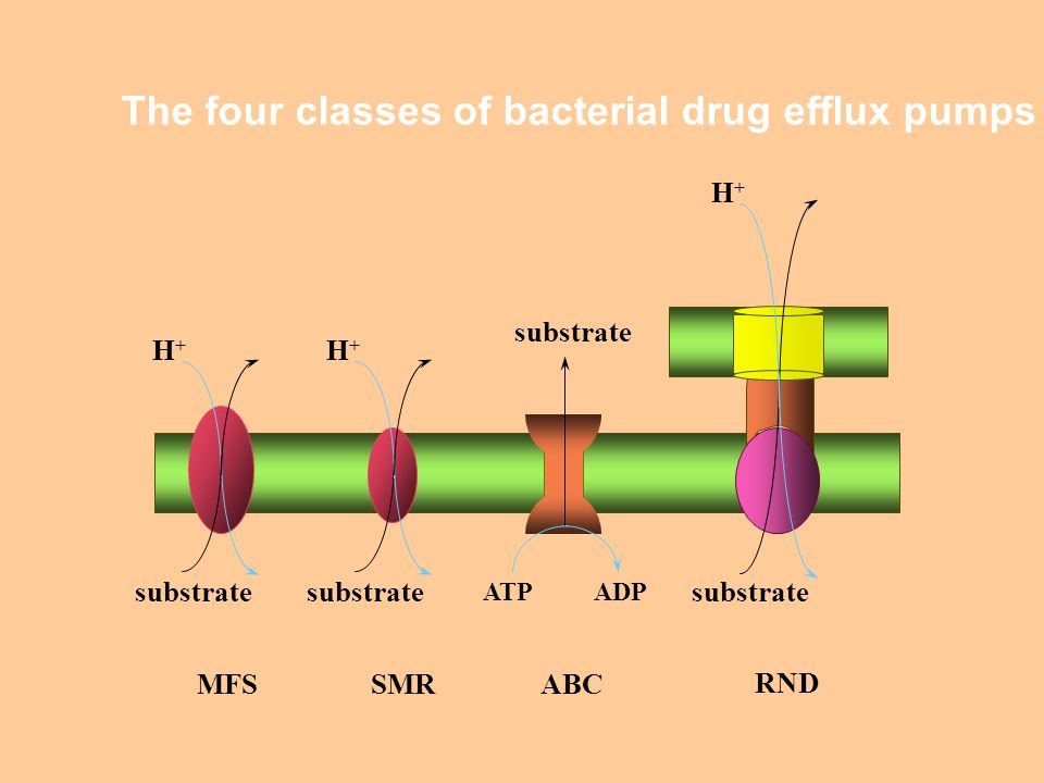 The four classes of bacterial drug efflux pumps