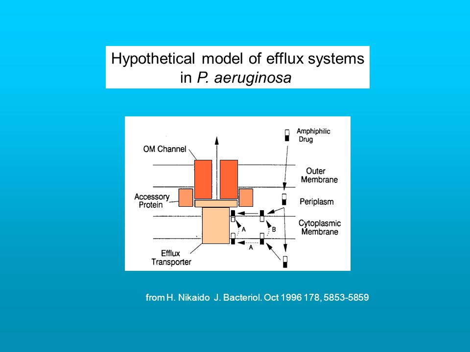Hypothetical model of efflux systems