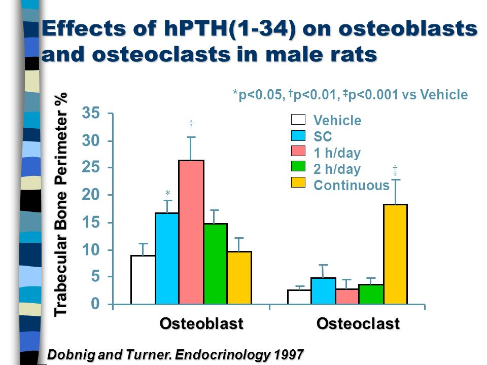 Effects of hPTH(1-34) on osteoblasts and osteoclasts in male rats