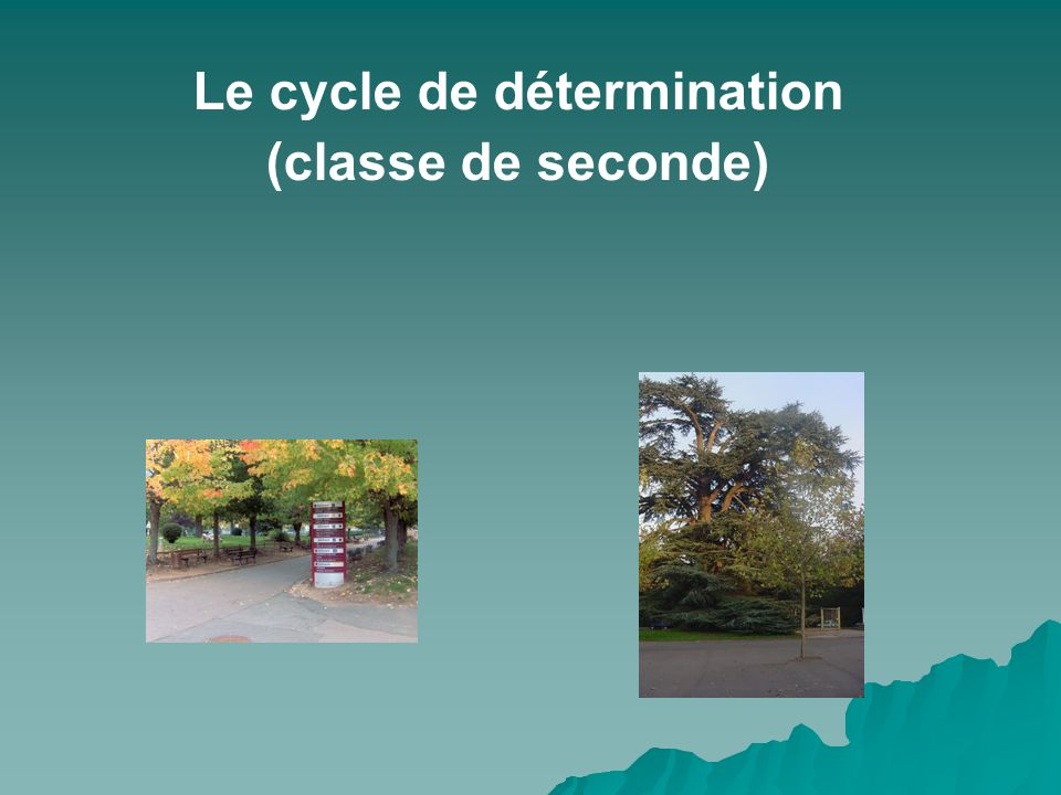 Le cycle de détermination (classe de seconde)