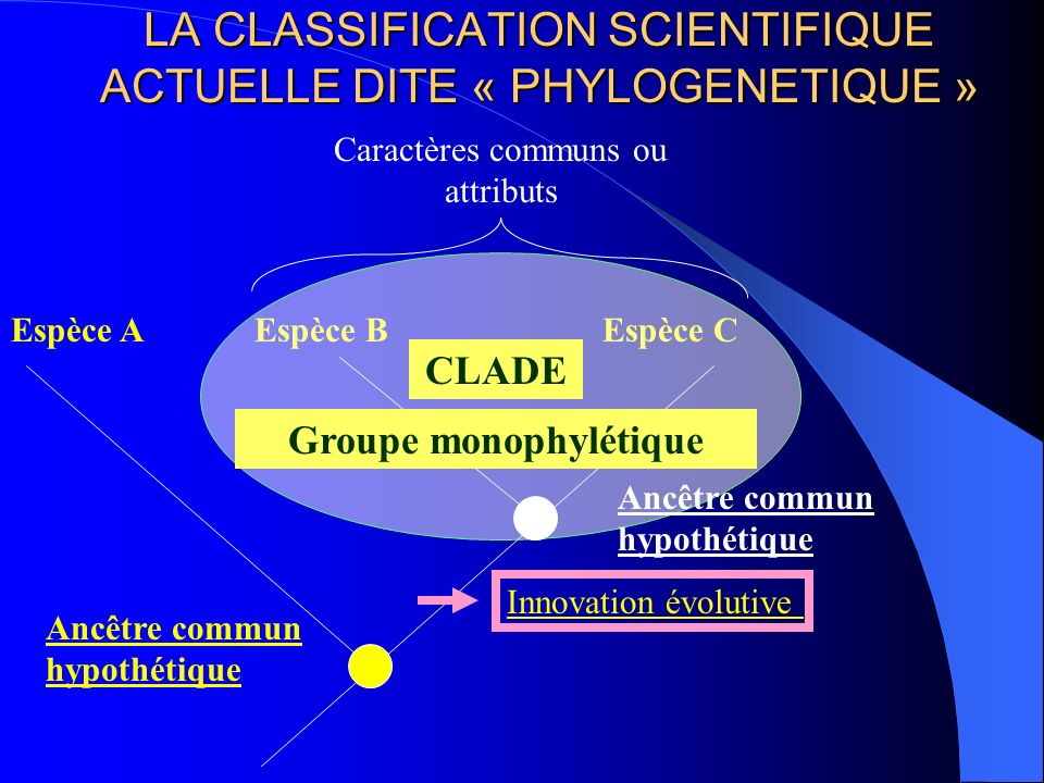 LA CLASSIFICATION SCIENTIFIQUE ACTUELLE DITE « PHYLOGENETIQUE »