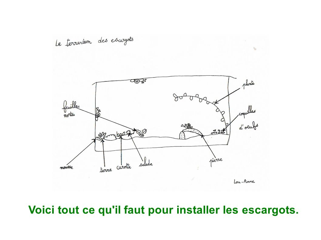 le terrarium des escargots ppt video online t l charger. Black Bedroom Furniture Sets. Home Design Ideas