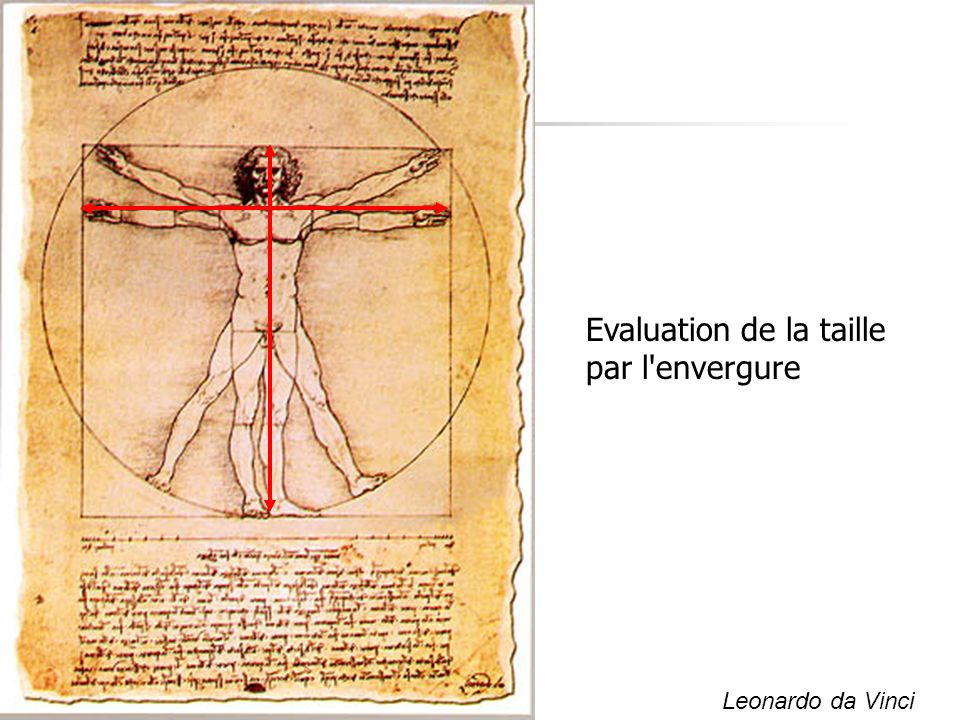 Evaluation de la taille par l envergure