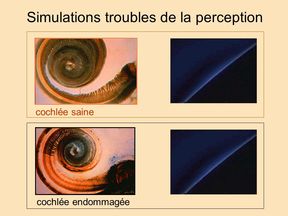 Simulations troubles de la perception
