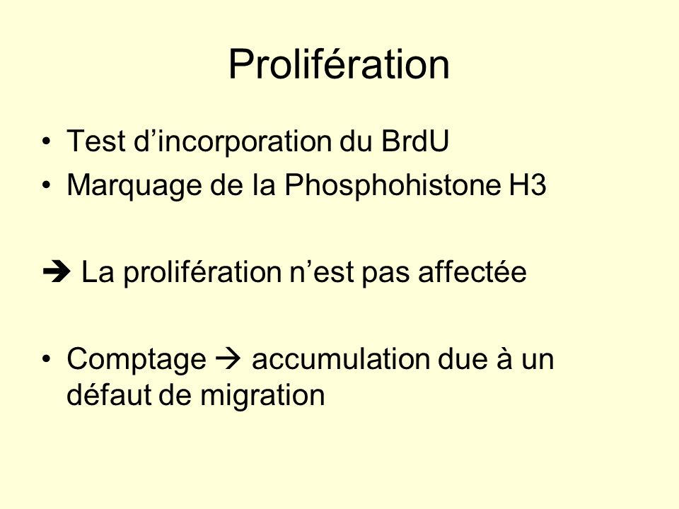 Prolifération Test d'incorporation du BrdU