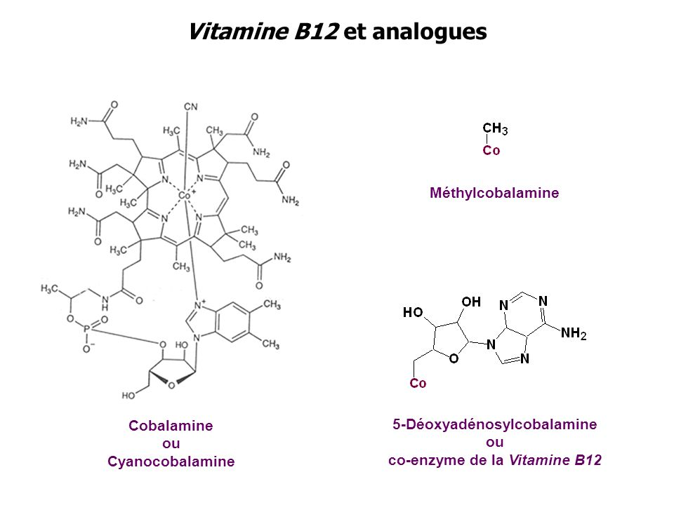 Vitamine B12 et analogues