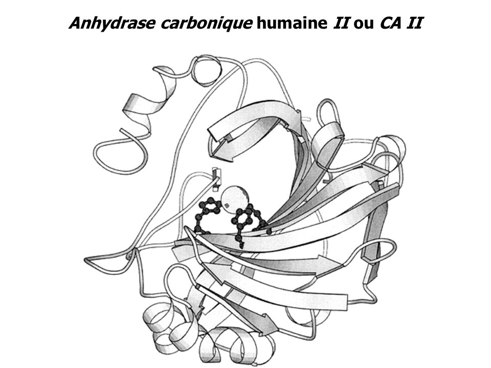 Anhydrase carbonique humaine II ou CA II