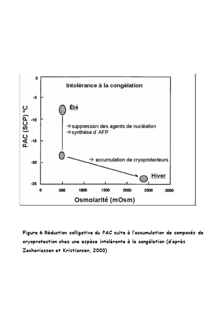 Figure 6 Réduction colligative du PAC suite à l'accumulation de composés de