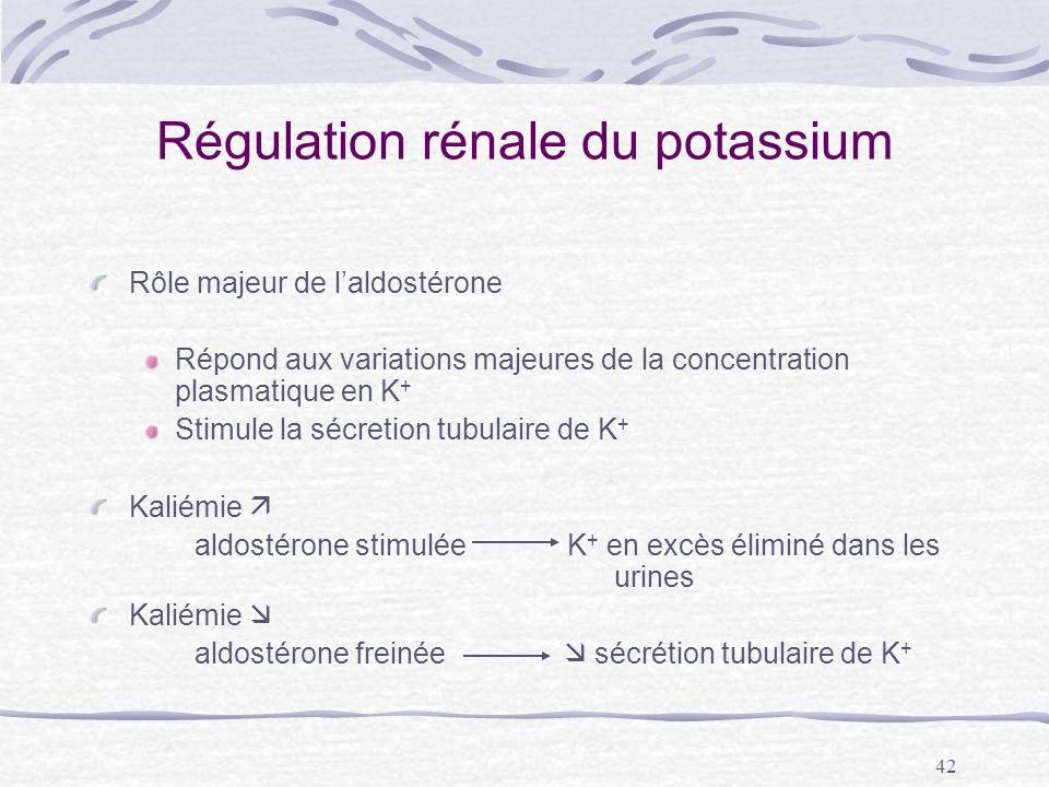 Régulation rénale du potassium