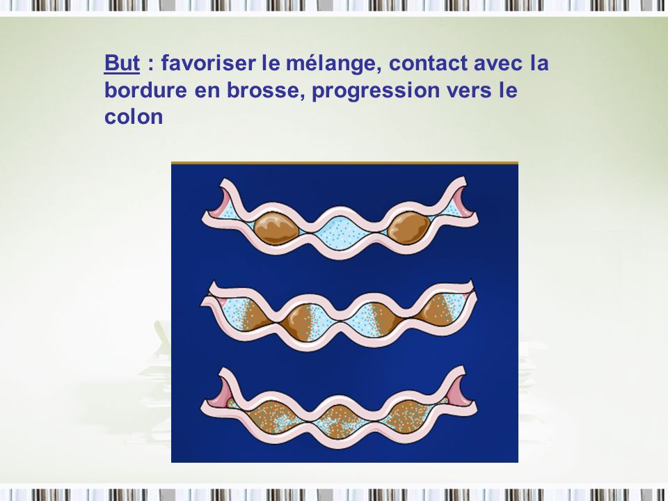 But : favoriser le mélange, contact avec la bordure en brosse, progression vers le colon