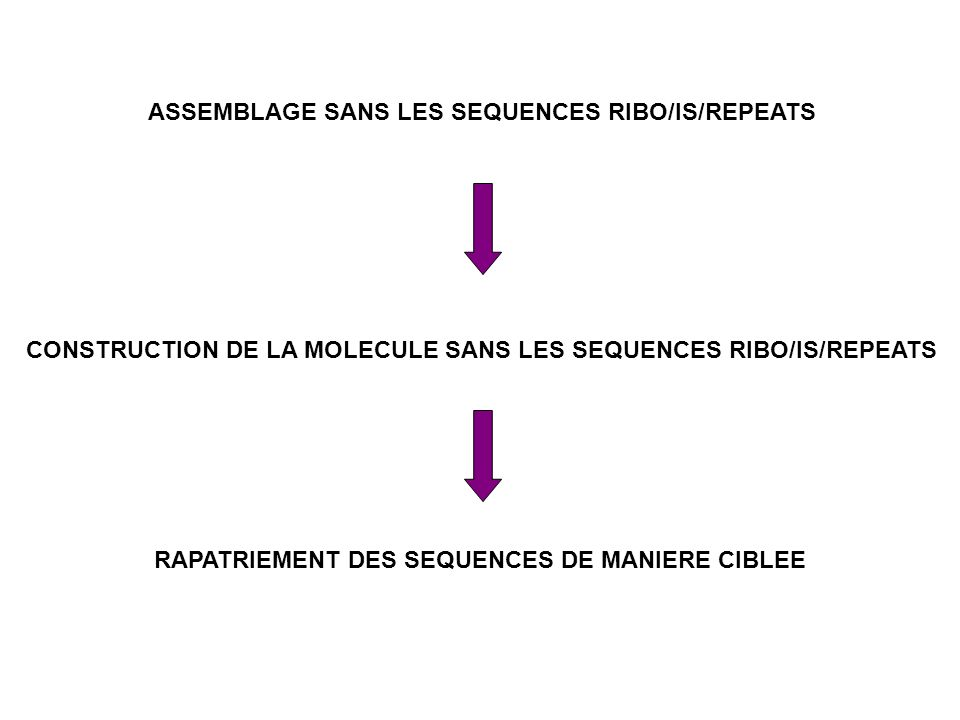 ASSEMBLAGE SANS LES SEQUENCES RIBO/IS/REPEATS