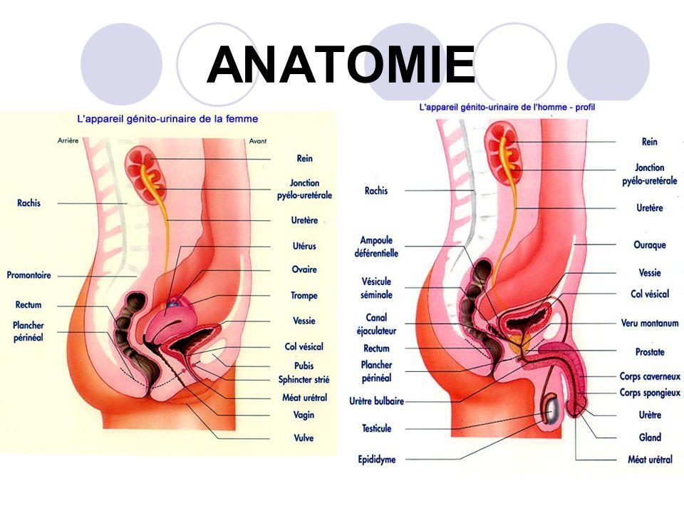 Ungewöhnlich Anatomie Nach Hysterektomie Galerie - Anatomie Ideen ...