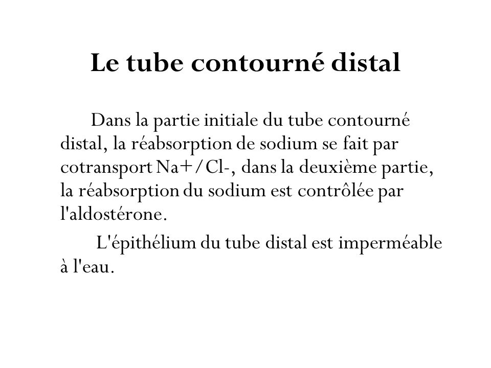 Le tube contourné distal