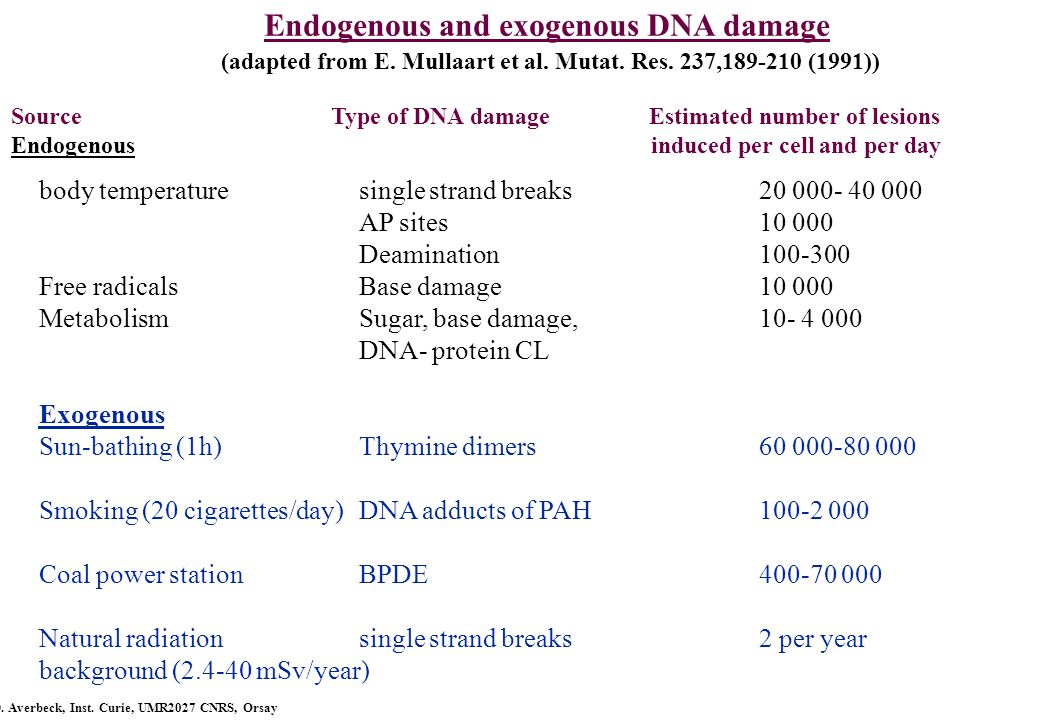 Endogenous and exogenous DNA damage