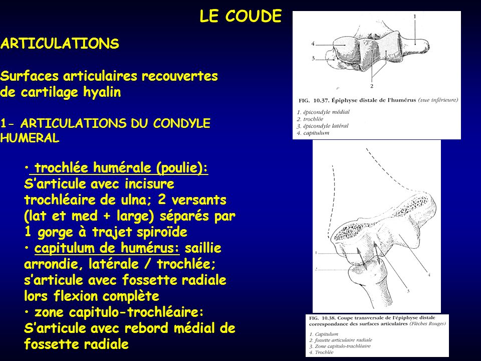LE COUDE ARTICULATIONS
