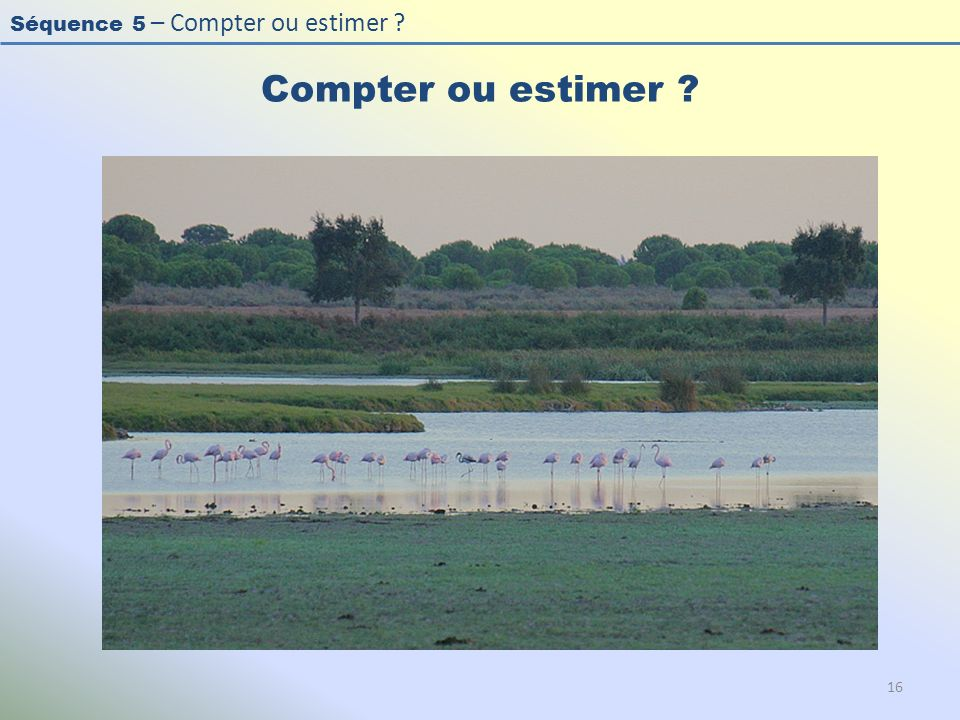 Compter ou estimer Photo : Flamant rose - Greater Flamingo - Phoenicopterus roseus.