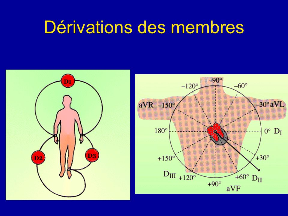 Dérivations des membres