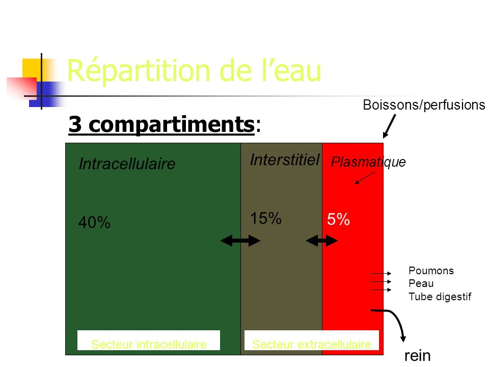 Répartition de l'eau 3 compartiments: Interstitiel Intracellulaire 15%