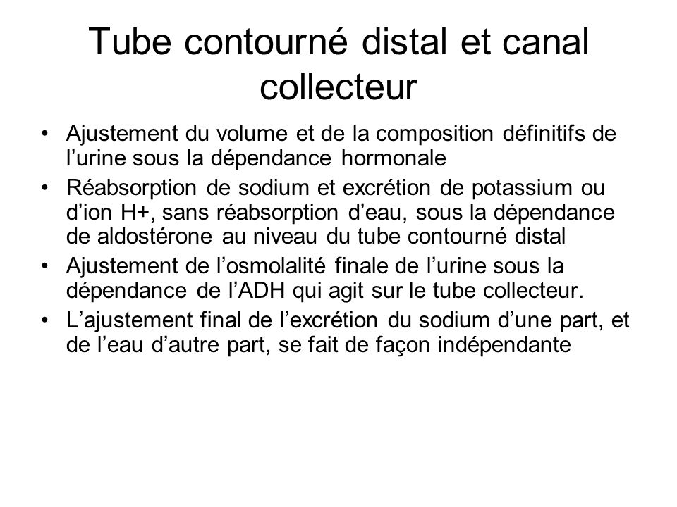 Tube contourné distal et canal collecteur