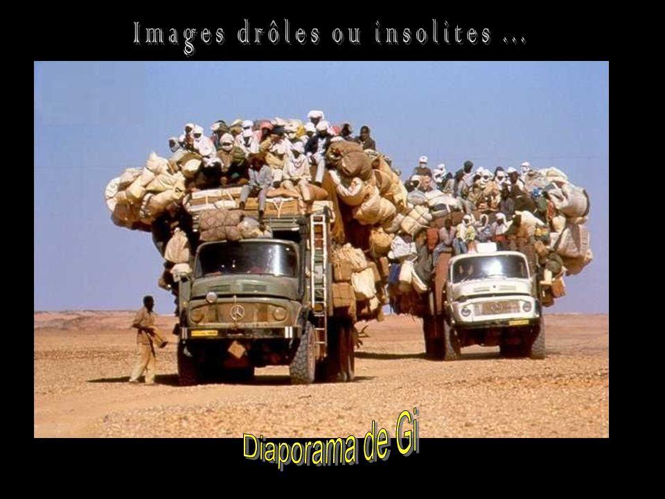 Images Droles Ou Insolites Ppt Telecharger