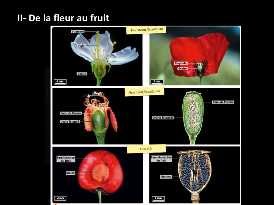 I Organisation Des Organes Reproducteurs Des Plantes A Fleurs Ppt