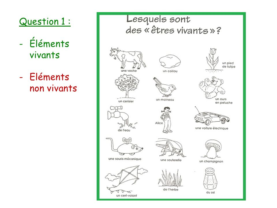 Question 1 : Éléments vivants Eléments non vivants
