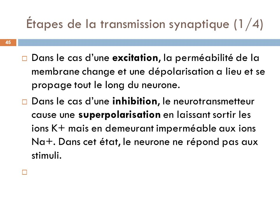 Étapes de la transmission synaptique (1/4)