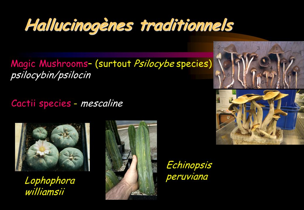 Hallucinogènes traditionnels