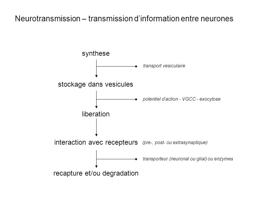 Neurotransmission – transmission d'information entre neurones