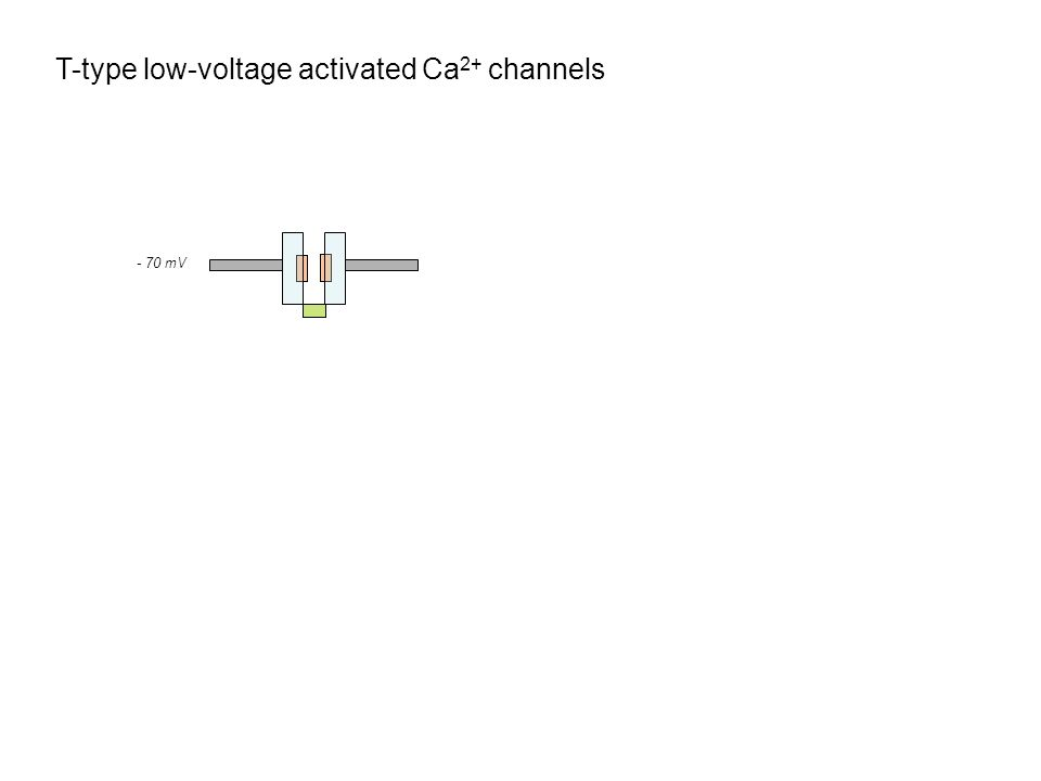 T-type low-voltage activated Ca2+ channels