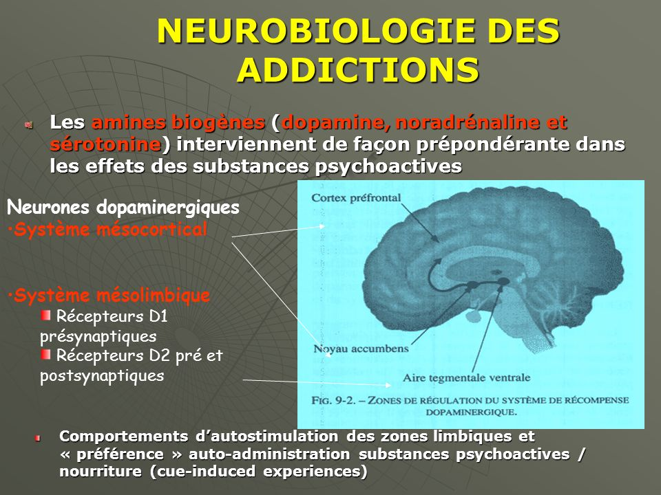 NEUROBIOLOGIE DES ADDICTIONS