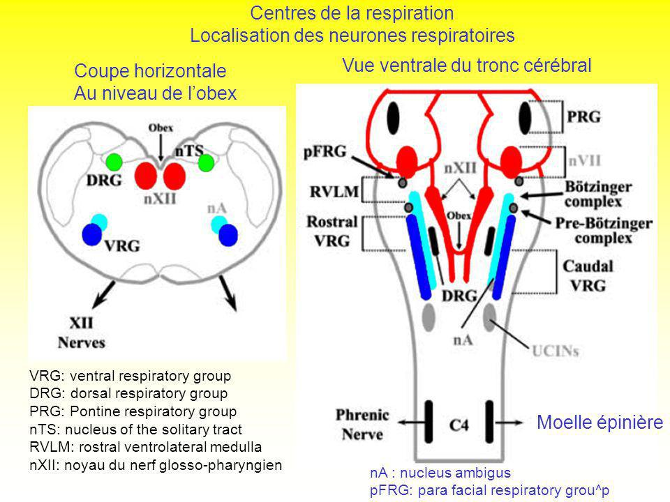 Regulation de la respiration pdf to excel