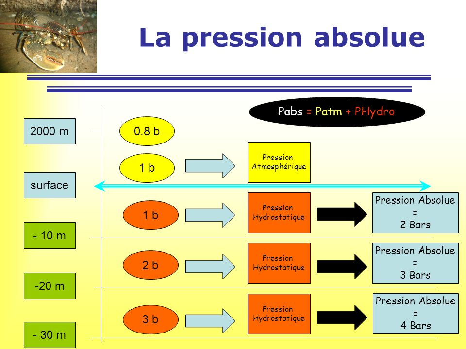 La pression absolue Pabs = Patm + PHydro 2000 m 0.8 b 1 b surface 1 b