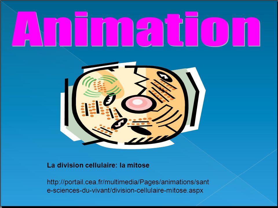 ANIMATION TÉLÉCHARGER MITOSE
