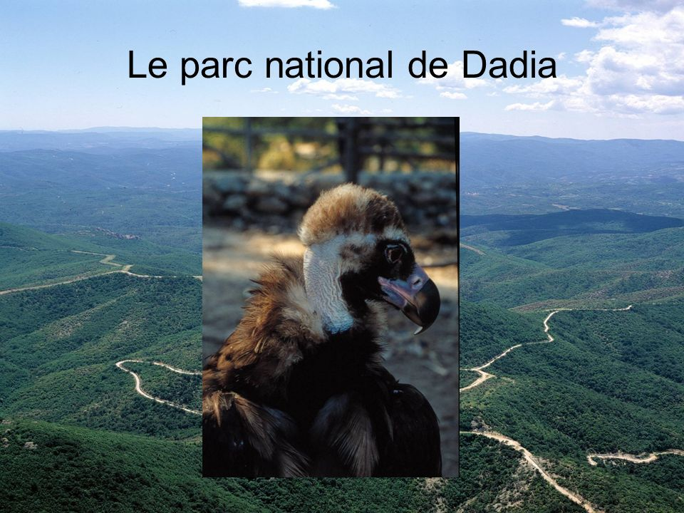 Le parc national de Dadia