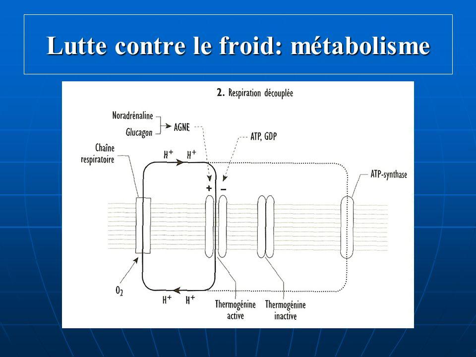 thermoregulation cours de physiologie p c e m 2 dr michel petitjean ppt video online t l charger. Black Bedroom Furniture Sets. Home Design Ideas