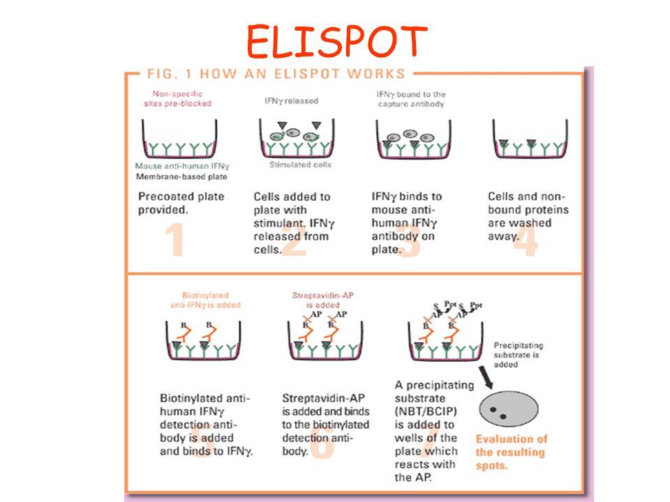 ELISPOT PRINCIPE EPUB DOWNLOAD
