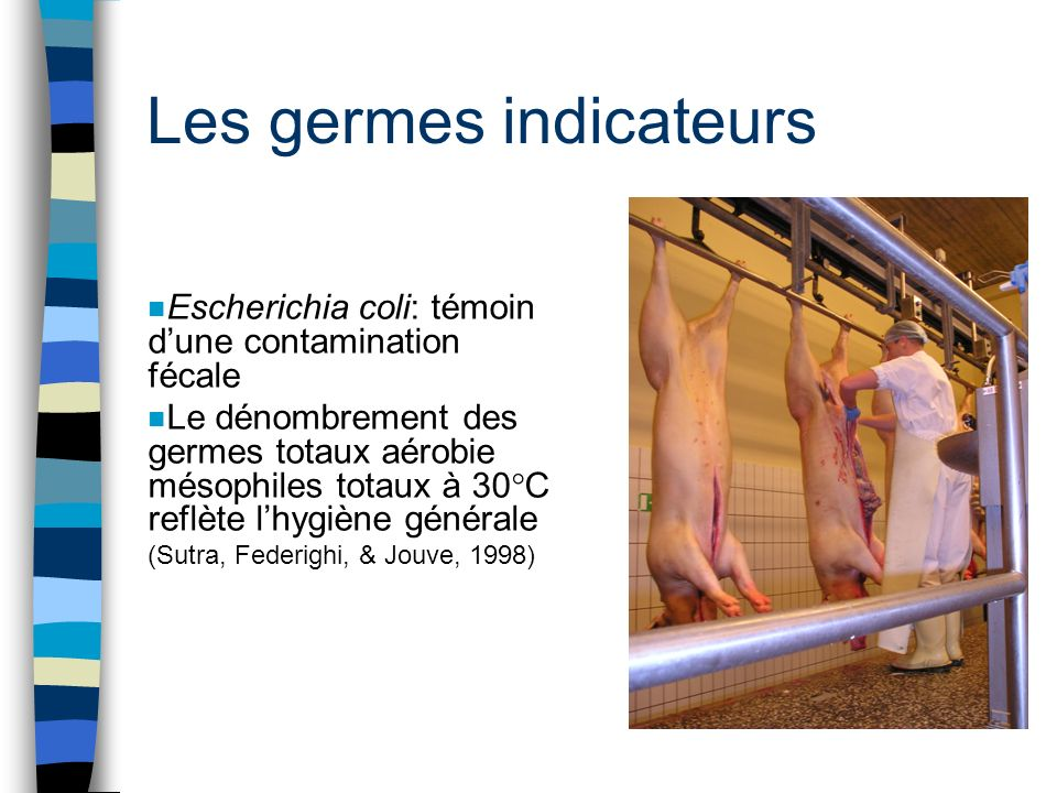 Les germes indicateurs