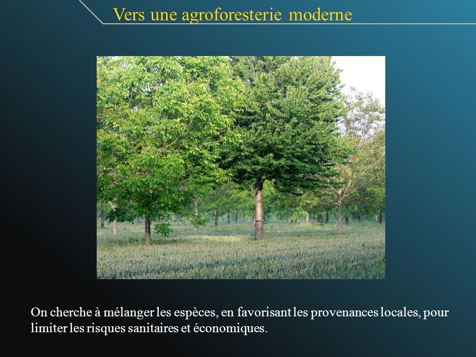 Vers une agroforesterie moderne